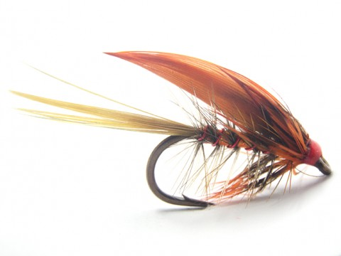 Orange Rough Fly