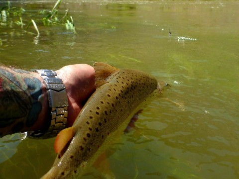 This Gunnison Gorge Brown found a heavy metal worm in less than a foot of visibility.
