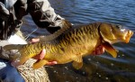 Mirror Carp Boulder Colorado