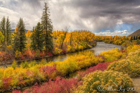 Gunnison River Fall Colors Almont, Colorado - photo by Allan Ivy
