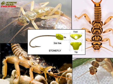Compilation_Stonefly_WITH-LOGO
