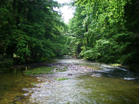 stream in NW Pennsylvania - Headwaters Fly Fishing