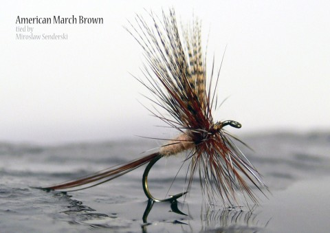 American March Brown tied by Miroslaw Senderski