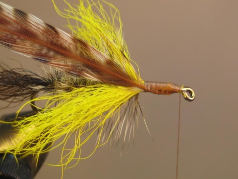 tie in hackle