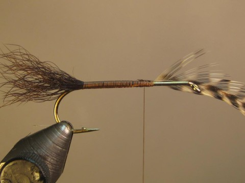 tie in undersized hackle at 2/3 mark