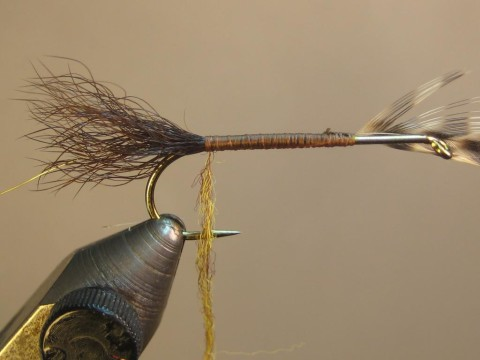 return hackle to tail tie-in; dub thread, dub body