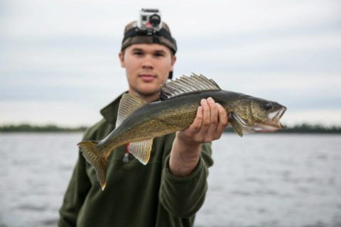 Canadian Walleye 1