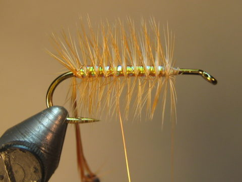 capture tip with wire; continue rib thru the hackle to the 2/3 mark, helicopter end, cover with thread, trim hackle tip